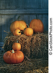 Assortment of pumpkins on hay