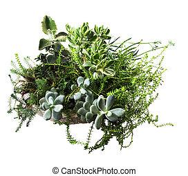 assortment of succulent plants