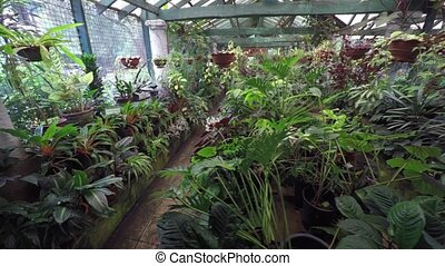 Assortment of Tropical Plants in a Sri Lankan Greenhouse -...