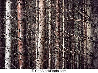 assustador, floresta