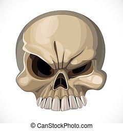 assustador, fundo branco, isolado, cranio
