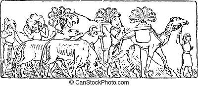 assyrian, ειδών ή πραγμάτων αλαφροπατώ , κρασί , engraving.