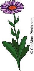 Aster - A violet flower on a green stem. An aster.