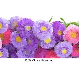 aster, fiori, bordo