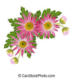 aster, fleurs, coin