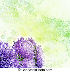 aster, fleurs