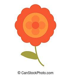 aster flower natural image