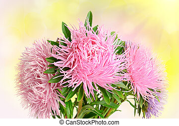 Aster flowers - Autumn aster flowers boquet on the colorful ...