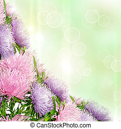 Aster flowers - Beautiful spring aster flowers boquet on the...