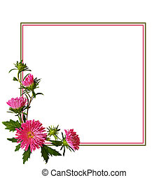 Aster flowers composition and frame on white background