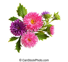 Asters composition isolated on white