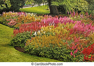 This fine display of Astilbe plants is at Holehead Garden near Windermere, the home of the Lakeland Horticultural Society.