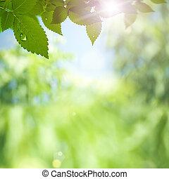 astratto, ambientale, sfondi, con, raggi sole, e, bellezza,...