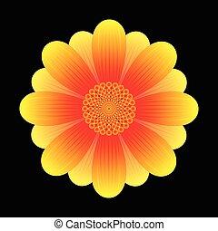 astratto, fiore, girasole