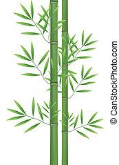 Pianta bamb fortunato giapponese immagine plant for Pianta bambu prezzo