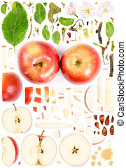 astratto, mela, collezione