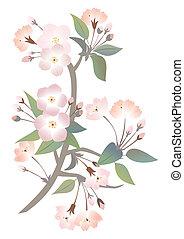 astratto, ramo, albero, mela