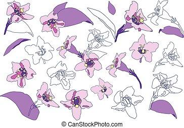 astratto, set, flowers., fiori, viola, colletion., isolato, ...