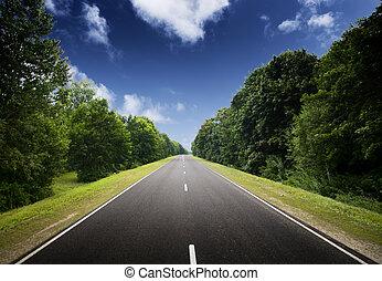 aszfalt út, alatt, zöld, forest.