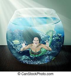 asztal, fish, hableány, fishbowl, rossz