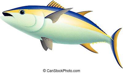 atún, aleta, pez, amarillo