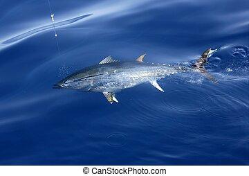 atún, liberación, azul, aleta, mediterráneo, pesca
