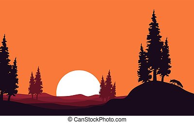 At afternoon landscape fox silhouettes