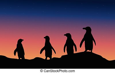 At night penguin scenery of silhouette