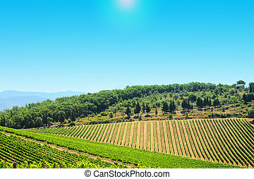 At Noon - Hill Of Tuscany With Vineyard In The Chianti ...