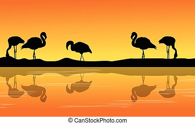 At riverbank with silhouette flamingo scenery