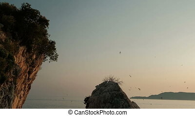 At sunset a flock of birds circling over a rock in seashore in summer.