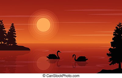 At sunset swan on lake scenery