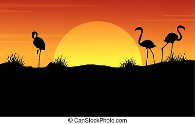 At sunset with flamingo silhouette landscape