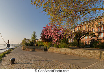 At the banks of river Rhine in Mainz, Germany