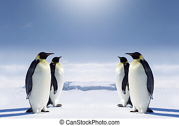 At the South pole - Two pairs of penguins facing each other ...