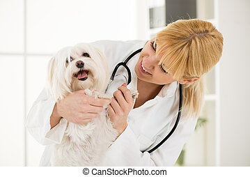 At the veterinary - Young female veterinary holding a...
