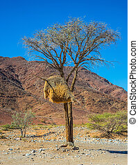 At tree - nest tropical bird