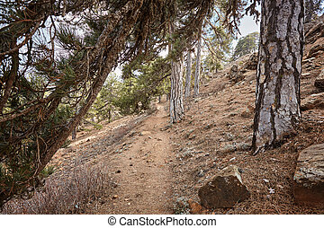 Atalanti national path. The trail goes around Chionistra mountain