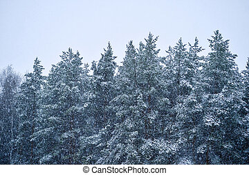 Ate in the forest during snowfall. Background