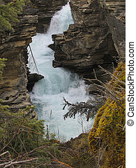 athabasca, fiume, in, jasper parco nazionale