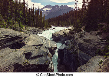 Athabasca river - Scenic views of the Athabasca River,...