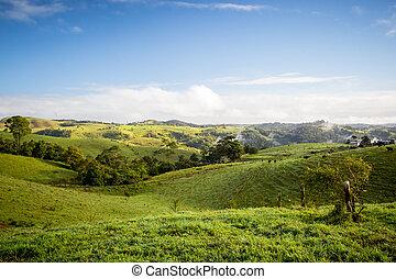 Atherton Tablelands on a Misty Morning - Atherton Tablelands...