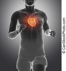 Athlete running man with healhy heart