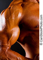 atlético, torso, primer plano, brazo