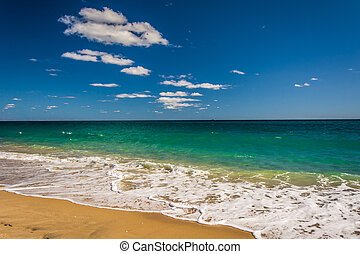 atlanti-, tengerpart, óceán, pálma, florida.