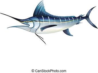 Atlantic blue marlin - Illustration of an Atlantic blue...