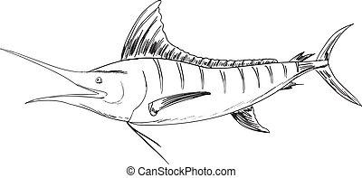 Atlantic  - Sketch of the Atlantic blue marlin