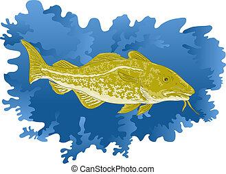 Atlantic cod fish - illustration of an Atlantic cod fish