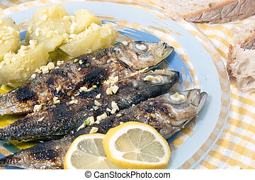 Atlantic horse mackerel meal
