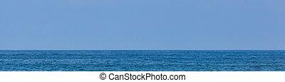 Atlantic Ocean Simple View - A single sea gull flies through...